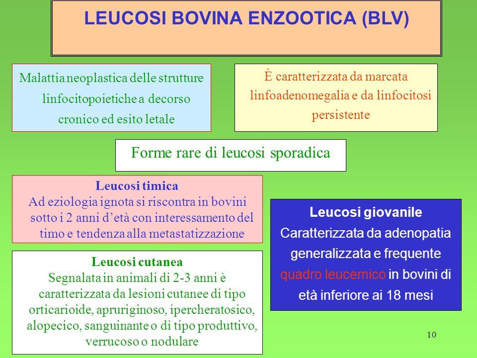 10 Malattia neoplastica delle strutture linfocitopoietiche a decorso cronico ed esito letale È caratterizzata da marcata linfoadenomegalia e da linfoc