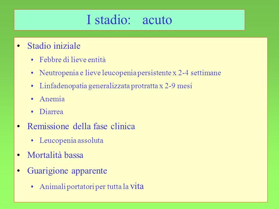 103 I stadio:acuto Stadio iniziale Febbre di lieve entità Neutropenia e lieve leucopenia persistente x 2-4 settimane Linfadenopatia generalizzata prot