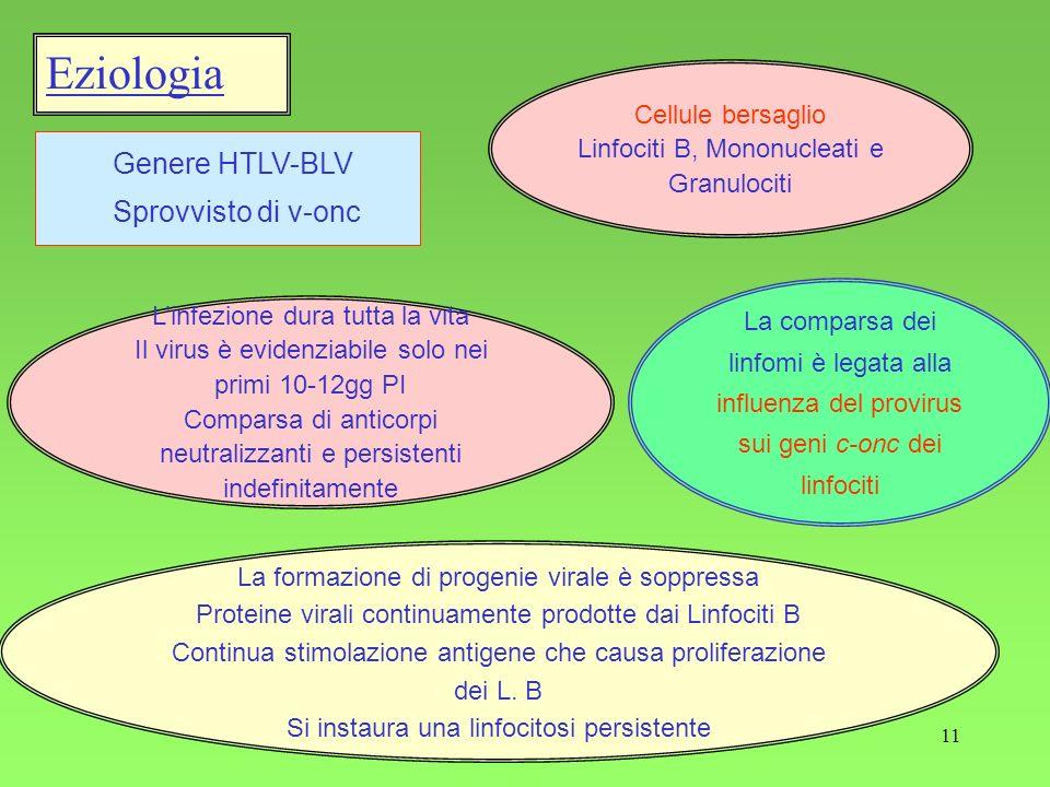 11 Eziologia Genere HTLV-BLV Sprovvisto di v-onc Cellule bersaglio Linfociti B, Mononucleati e Granulociti La formazione di progenie virale è soppress