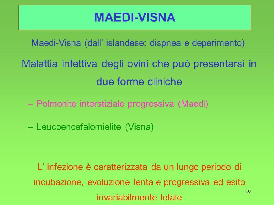 29 MAEDI-VISNA Malattia infettiva degli ovini che può presentarsi in due forme cliniche –Polmonite interstiziale progressiva (Maedi) –Leucoencefalomie