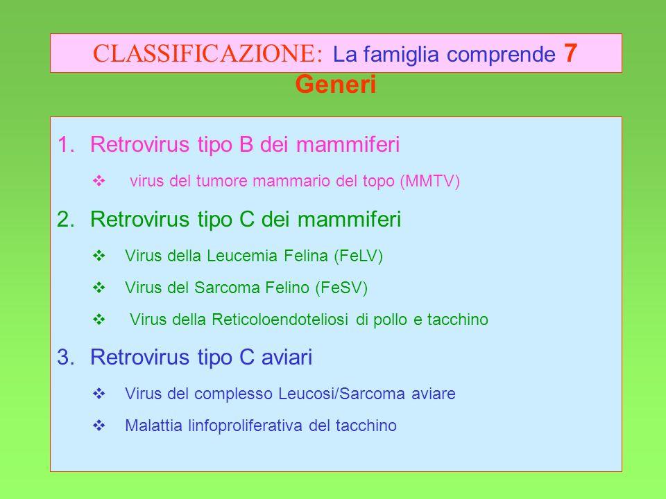 3 Retrovirus tipo B dei mammiferi virus del tumore mammario del topo (MMTV) Retrovirus tipo C dei mammiferi Virus della Leucemia Felina (FeLV) Virus d