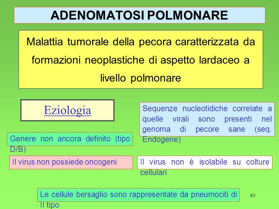 40 ADENOMATOSI POLMONARE Malattia tumorale della pecora caratterizzata da formazioni neoplastiche di aspetto lardaceo a livello polmonare Eziologia Ge