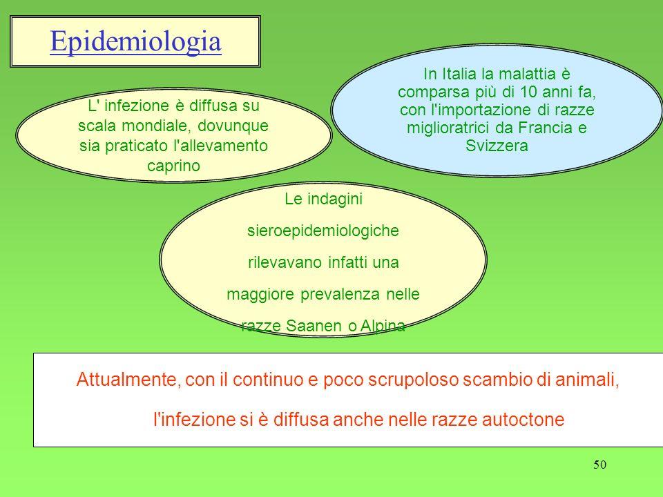 50 Epidemiologia L' infezione è diffusa su scala mondiale, dovunque sia praticato l'allevamento caprino In Italia la malattia è comparsa più di 10 ann