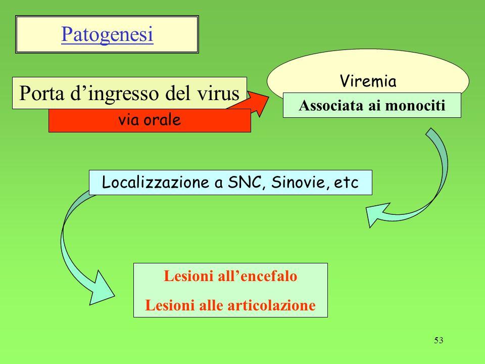 53 Porta dingresso del virus via orale Localizzazione a SNC, Sinovie, etc Lesioni allencefalo Lesioni alle articolazione Viremia Associata ai monociti