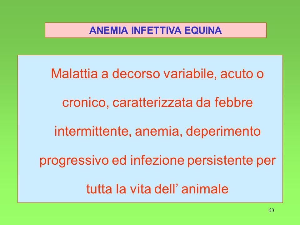 63 ANEMIA INFETTIVA EQUINA Malattia a decorso variabile, acuto o cronico, caratterizzata da febbre intermittente, anemia, deperimento progressivo ed i