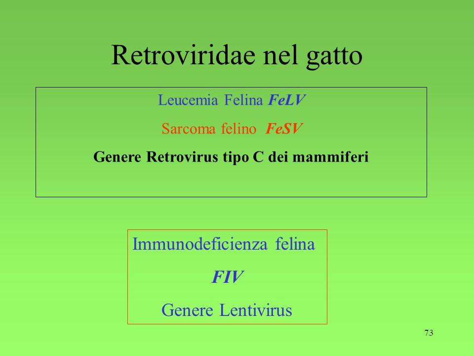73 Retroviridae nel gatto Leucemia Felina FeLV Sarcoma felino FeSV Genere Retrovirus tipo C dei mammiferi Immunodeficienza felina FIV Genere Lentiviru