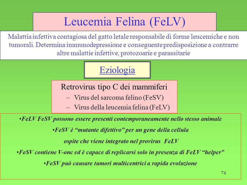74 Leucemia Felina (FeLV) Retrovirus tipo C dei mammiferi –Virus del sarcoma felino (FeSV) –Virus della leucemia felina (FeLV) Eziologia Malattia infe