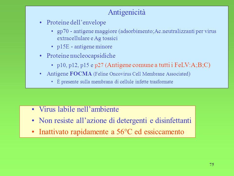 75 Antigenicità Proteine dellenvelope gp70 - antigene maggiore (adsorbimento;Ac.neutralizzanti per virus extracellulare e Ag tossici p15E - antigene m