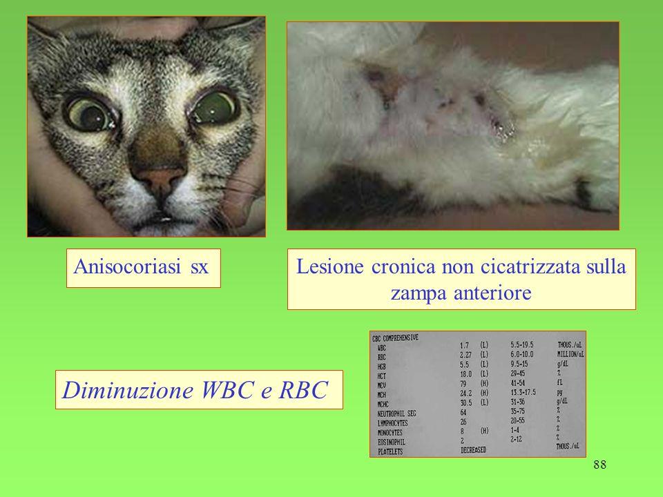 88 Anisocoriasi sxLesione cronica non cicatrizzata sulla zampa anteriore Diminuzione WBC e RBC
