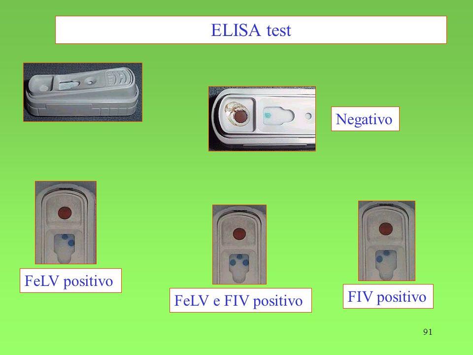 91 ELISA test FeLV positivo FeLV e FIV positivo FIV positivo Negativo