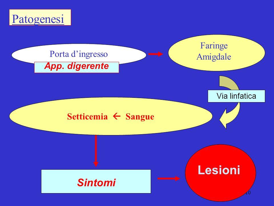 10 Patogenesi Faringe Amigdale Sintomi Porta dingresso App.
