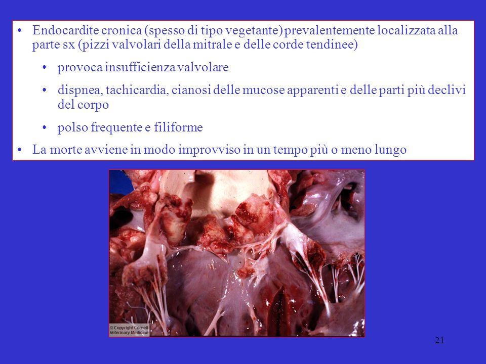 21 Endocardite cronica (spesso di tipo vegetante) prevalentemente localizzata alla parte sx (pizzi valvolari della mitrale e delle corde tendinee) provoca insufficienza valvolare dispnea, tachicardia, cianosi delle mucose apparenti e delle parti più declivi del corpo polso frequente e filiforme La morte avviene in modo improvviso in un tempo più o meno lungo