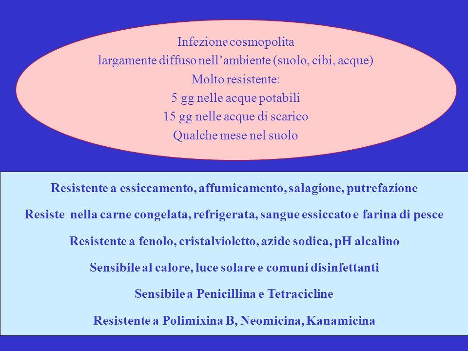 4 Resistente a essiccamento, affumicamento, salagione, putrefazione Resiste nella carne congelata, refrigerata, sangue essiccato e farina di pesce Resistente a fenolo, cristalvioletto, azide sodica, pH alcalino Sensibile al calore, luce solare e comuni disinfettanti Sensibile a Penicillina e Tetracicline Resistente a Polimixina B, Neomicina, Kanamicina Infezione cosmopolita largamente diffuso nellambiente (suolo, cibi, acque) Molto resistente: 5 gg nelle acque potabili 15 gg nelle acque di scarico Qualche mese nel suolo