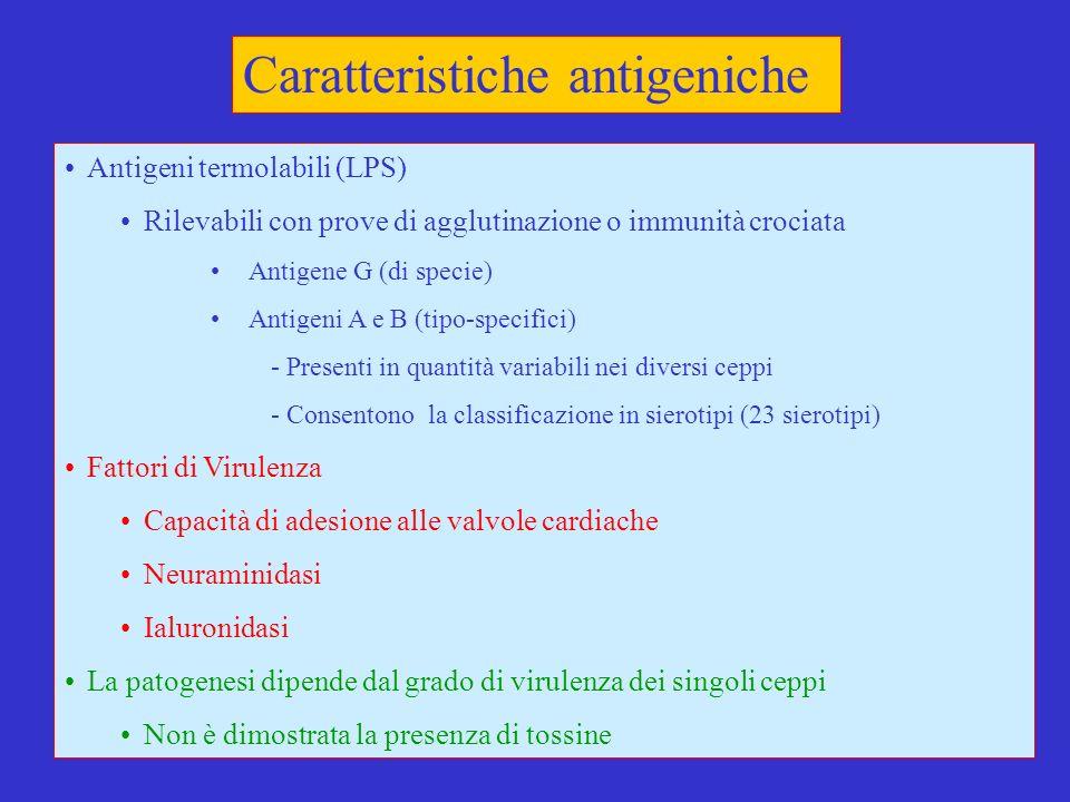 5 Caratteristiche antigeniche Antigeni termolabili (LPS) Rilevabili con prove di agglutinazione o immunità crociata Antigene G (di specie) Antigeni A e B (tipo-specifici) - Presenti in quantità variabili nei diversi ceppi - Consentono la classificazione in sierotipi (23 sierotipi) Fattori di Virulenza Capacità di adesione alle valvole cardiache Neuraminidasi Ialuronidasi La patogenesi dipende dal grado di virulenza dei singoli ceppi Non è dimostrata la presenza di tossine