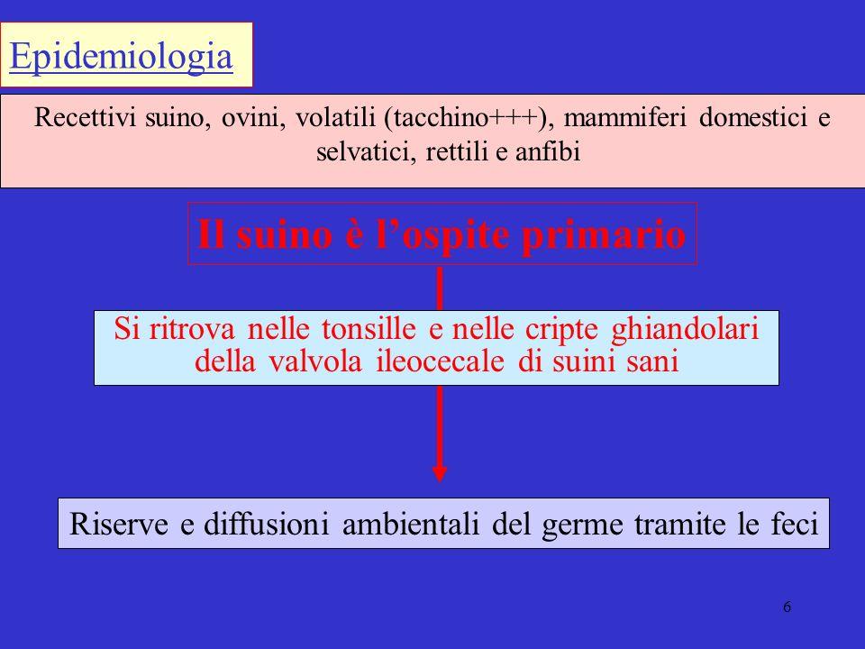 7 Secrezione nasale Saliva Urine Feci Microrganismi eliminati con Suolo importante fonte di trasmissione indiretta
