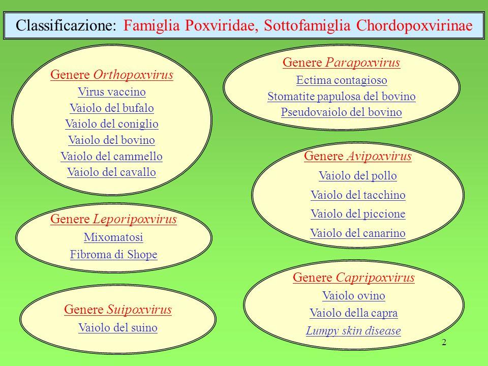 2 Genere Orthopoxvirus Virus vaccino Vaiolo del bufalo Vaiolo del coniglio Vaiolo del bovino Vaiolo del cammello Vaiolo del cavallo Genere Leporipoxvirus Mixomatosi Fibroma di Shope Genere Capripoxvirus Vaiolo ovino Vaiolo della capra Lumpy skin disease Genere Parapoxvirus Ectima contagioso Stomatite papulosa del bovino Pseudovaiolo del bovino Genere Avipoxvirus Vaiolo del pollo Vaiolo del tacchino Vaiolo del piccione Vaiolo del canarino Classificazione: Famiglia Poxviridae, Sottofamiglia Chordopoxvirinae Genere Suipoxvirus Vaiolo del suino