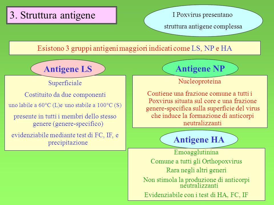 7 I Poxvirus presentano struttura antigene complessa 3.