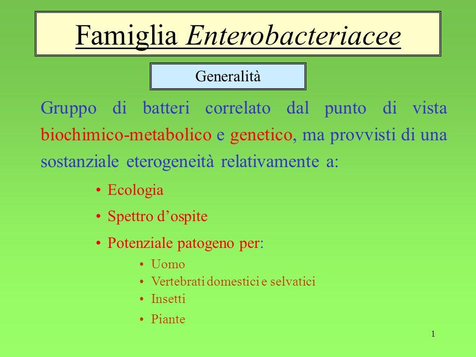 1 Famiglia Enterobacteriacee Gruppo di batteri correlato dal punto di vista biochimico-metabolico e genetico, ma provvisti di una sostanziale eterogen