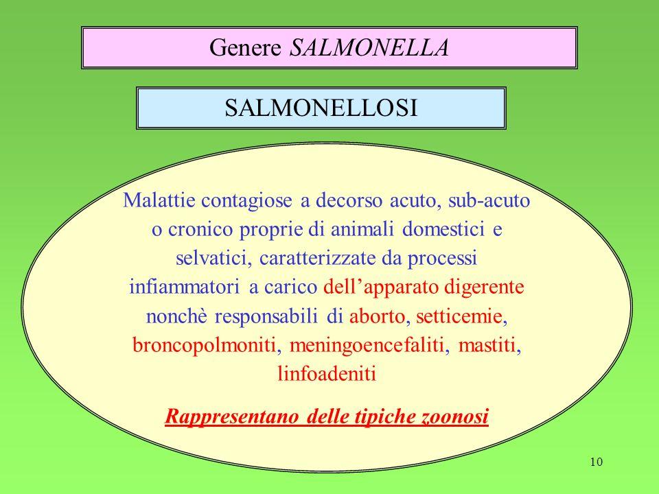 10 Genere SALMONELLA SALMONELLOSI Malattie contagiose a decorso acuto, sub-acuto o cronico proprie di animali domestici e selvatici, caratterizzate da