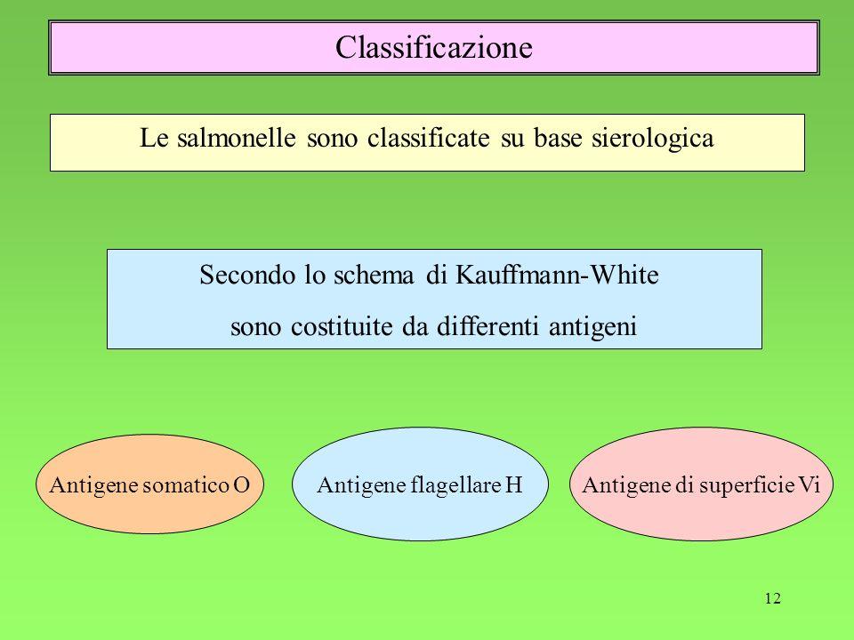 12 Le salmonelle sono classificate su base sierologica Classificazione Secondo lo schema di Kauffmann-White sono costituite da differenti antigeni Ant