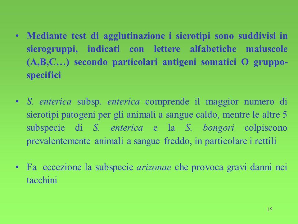 15 Mediante test di agglutinazione i sierotipi sono suddivisi in sierogruppi, indicati con lettere alfabetiche maiuscole (A,B,C…) secondo particolari