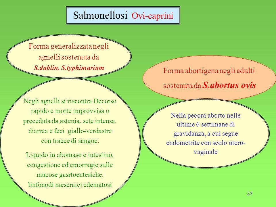 25 Forma generalizzata negli agnelli sostenuta da S.dublin, S.typhimurium Negli agnelli si riscontra Decorso rapido e morte improvvisa o preceduta da