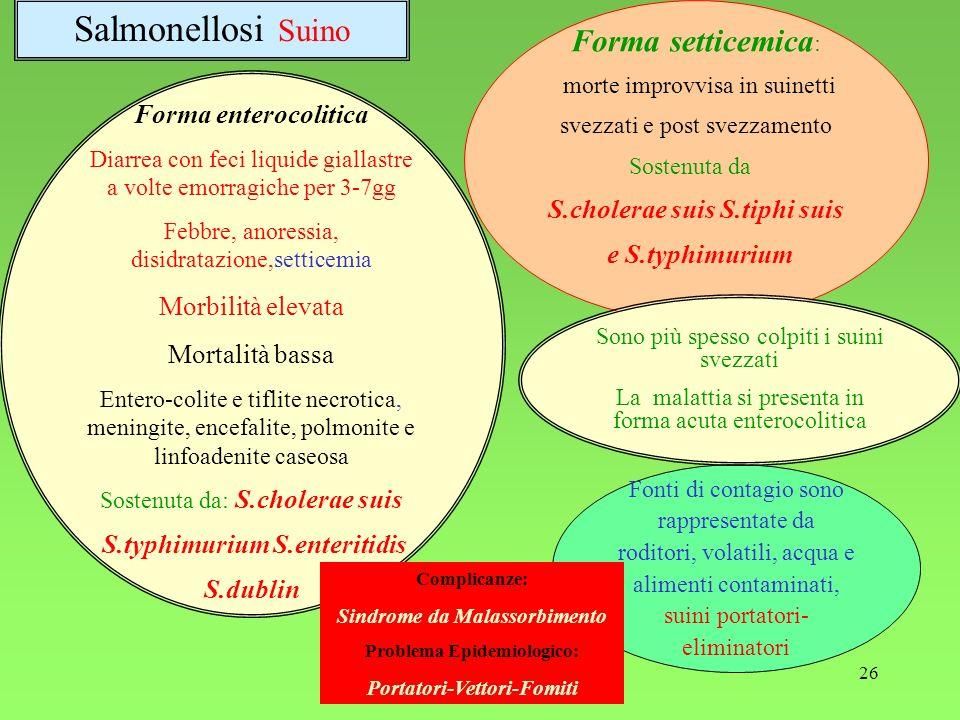 26 Forma enterocolitica Diarrea con feci liquide giallastre a volte emorragiche per 3-7gg Febbre, anoressia, disidratazione,setticemia Morbilità eleva