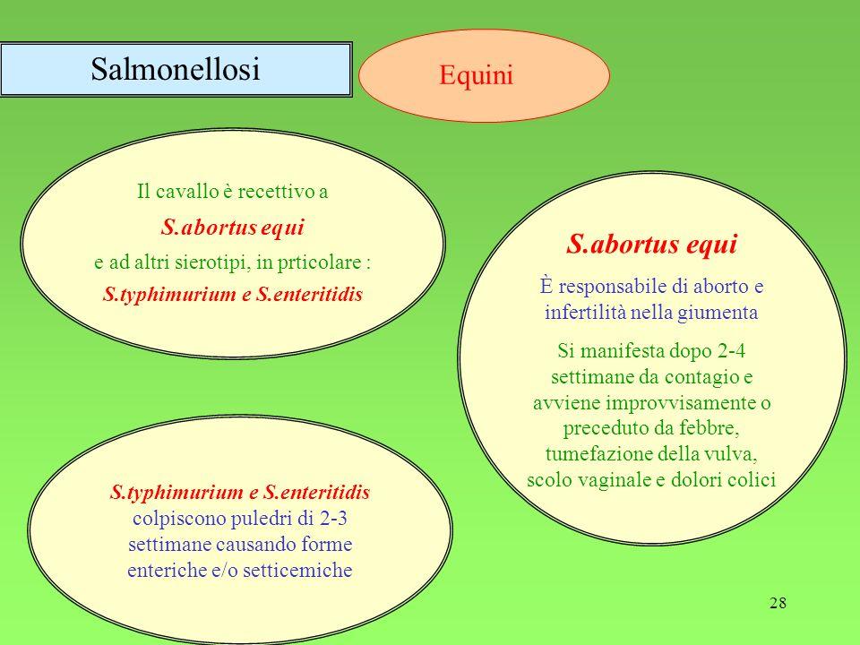 28 Il cavallo è recettivo a S.abortus equi e ad altri sierotipi, in prticolare : S.typhimurium e S.enteritidis S.typhimurium e S.enteritidis colpiscon
