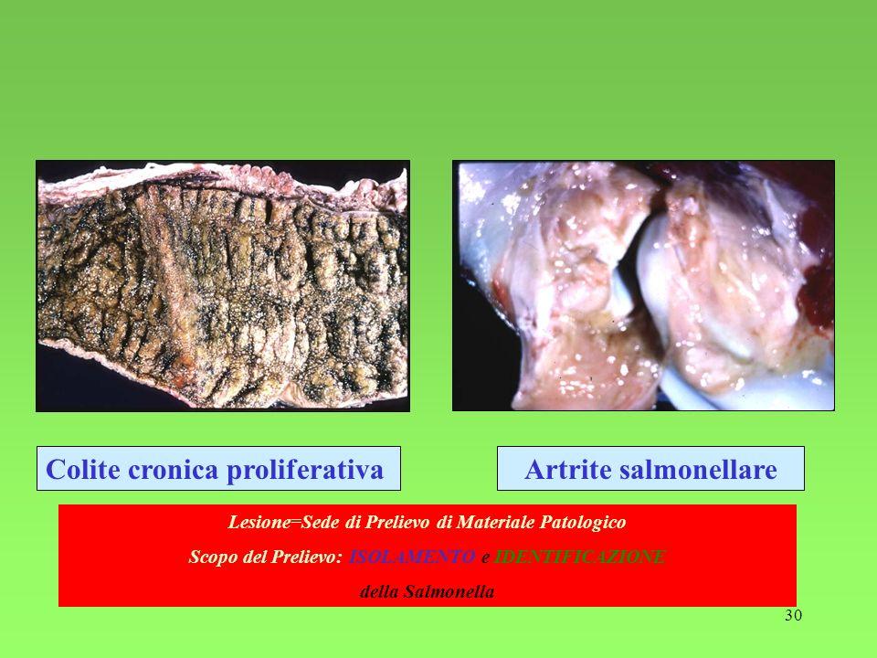30 Artrite salmonellareColite cronica proliferativa Lesione=Sede di Prelievo di Materiale Patologico Scopo del Prelievo: ISOLAMENTO e IDENTIFICAZIONE