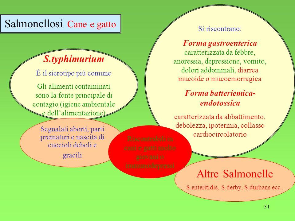 31 S.typhimurium È il sierotipo più comune Gli alimenti contaminati sono la fonte principale di contagio (igiene ambientale e dellalimentazione) Altre