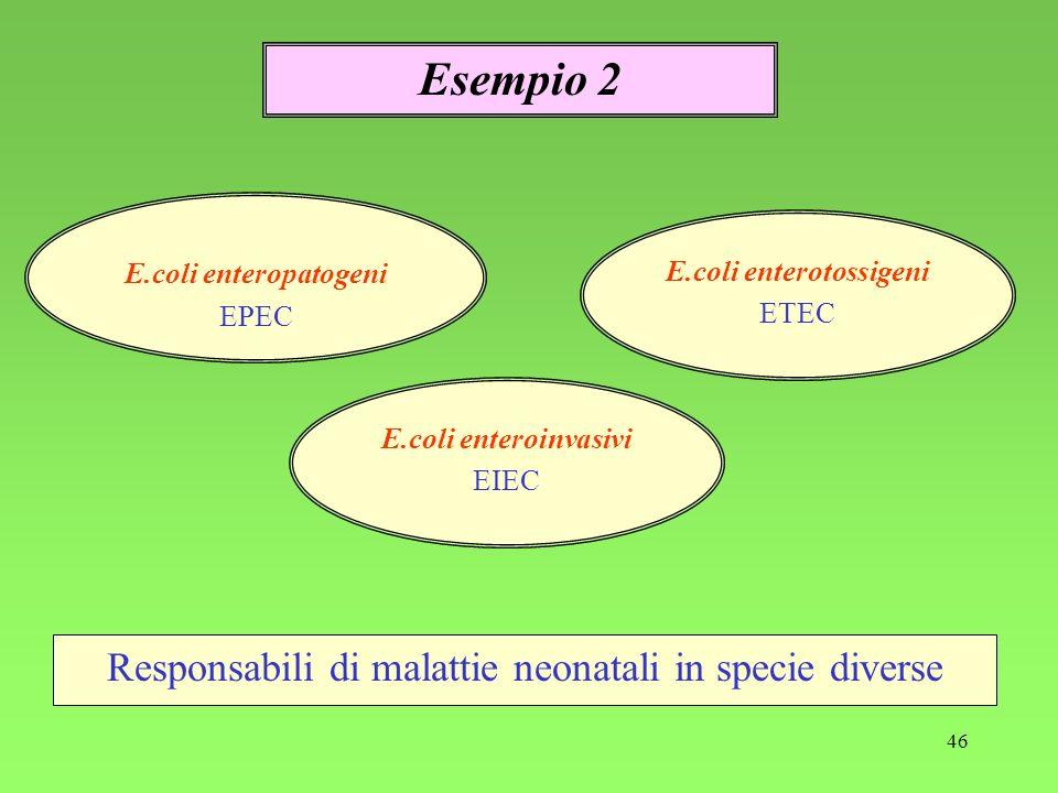 46 Responsabili di malattie neonatali in specie diverse Esempio 2 E.coli enteropatogeni EPEC E.coli enterotossigeni ETEC E.coli enteroinvasivi EIEC