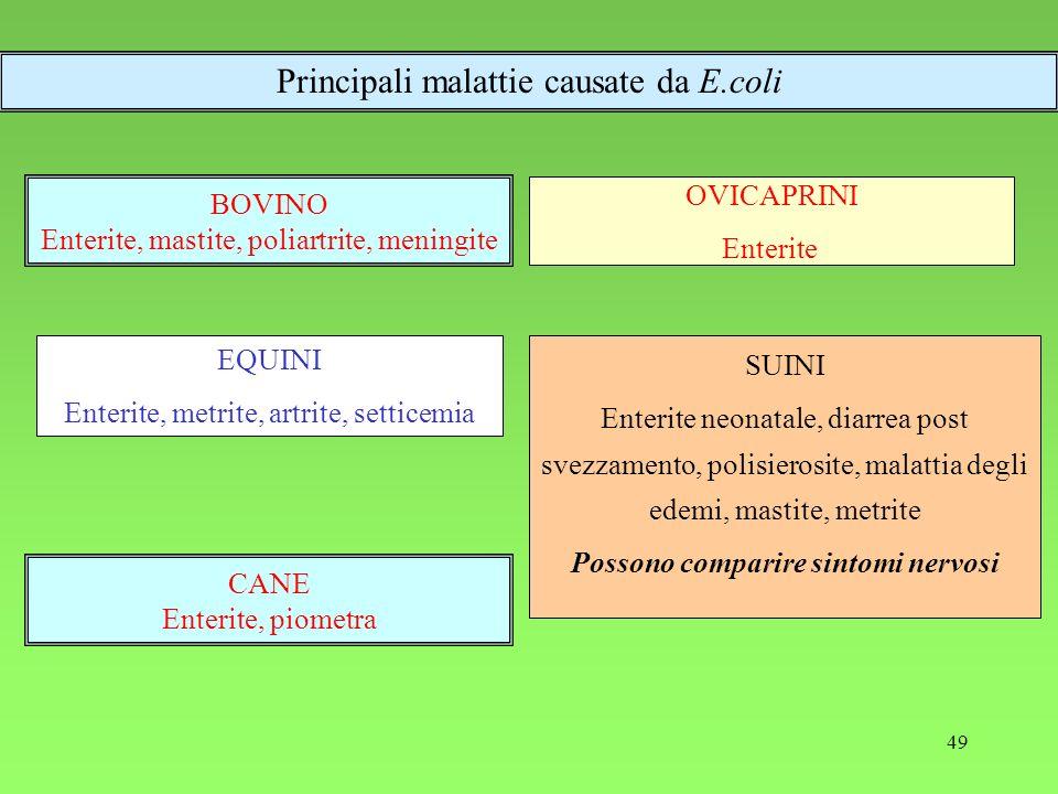 49 BOVINO Enterite, mastite, poliartrite, meningite SUINI Enterite neonatale, diarrea post svezzamento, polisierosite, malattia degli edemi, mastite,