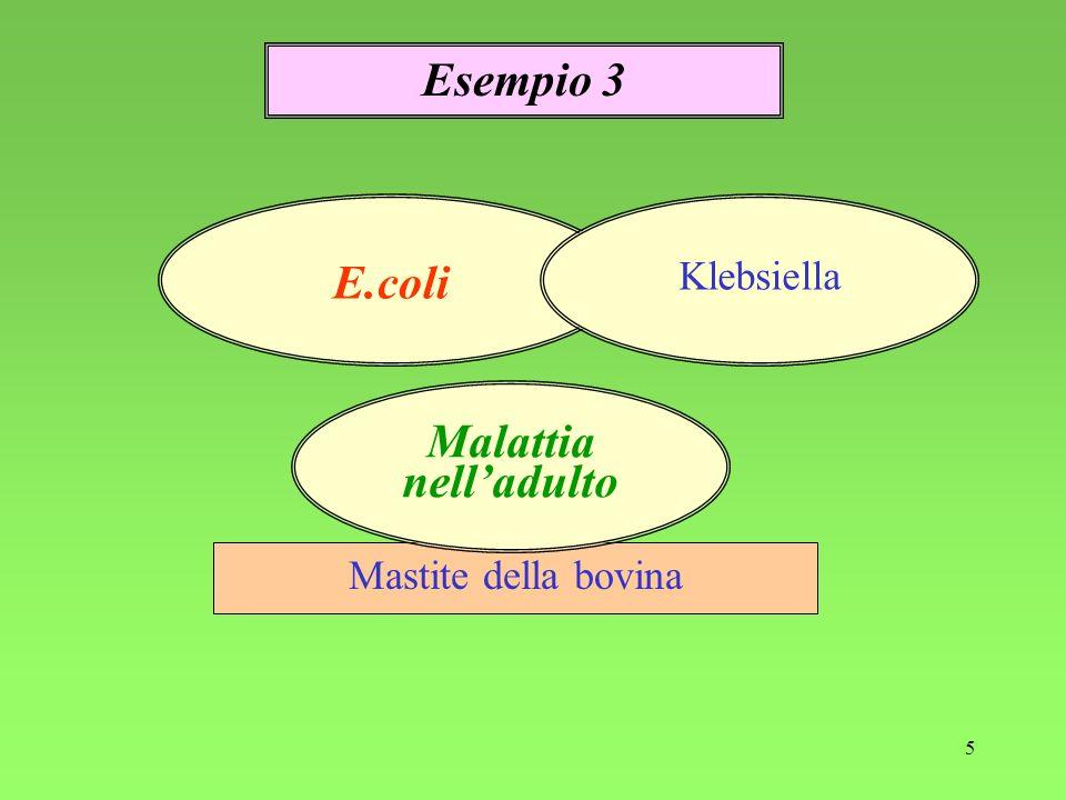 5 Mastite della bovina Esempio 3 E.coli Klebsiella Malattia nelladulto