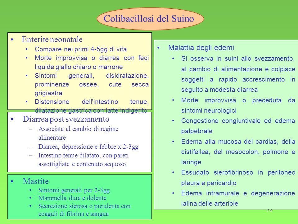 52 Diarrea post svezzamento –Associata al cambio di regime alimentare –Diarrea, depressione e febbre x 2-3gg –Intestino tenue dilatato, con pareti ass