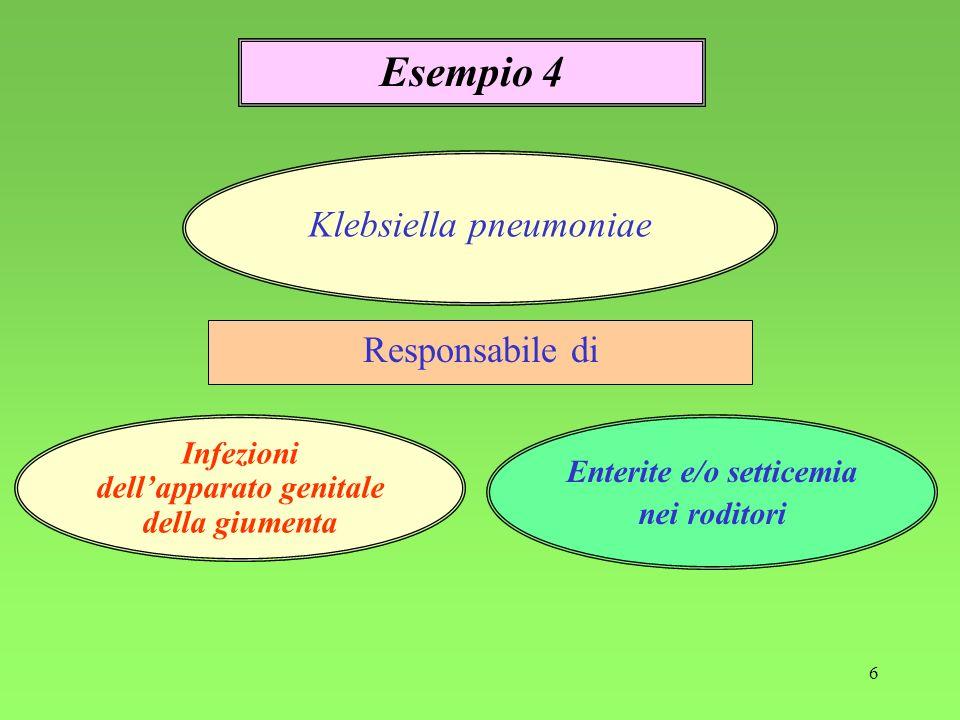 6 Responsabile di Esempio 4 Infezioni dellapparato genitale della giumenta Klebsiella pneumoniae Enterite e/o setticemia nei roditori