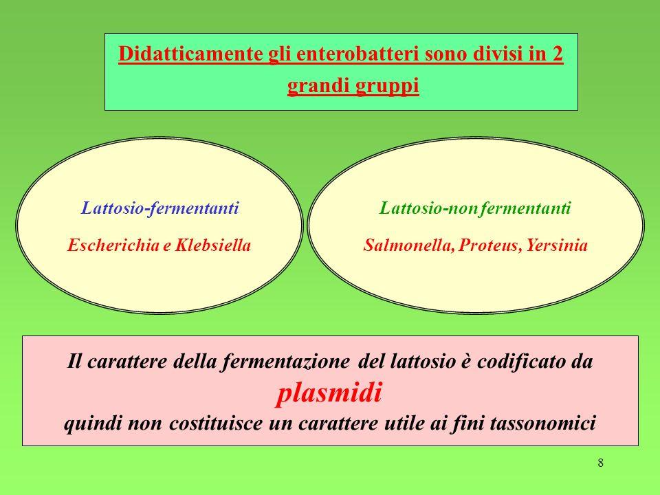8 Didatticamente gli enterobatteri sono divisi in 2 grandi gruppi Lattosio-fermentanti Escherichia e Klebsiella Lattosio-non fermentanti Salmonella, P