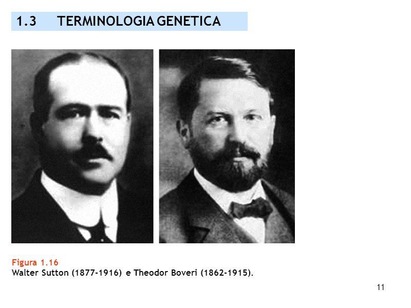 11 Figura 1.16 Walter Sutton (1877-1916) e Theodor Boveri (1862-1915). 1.3 TERMINOLOGIA GENETICA