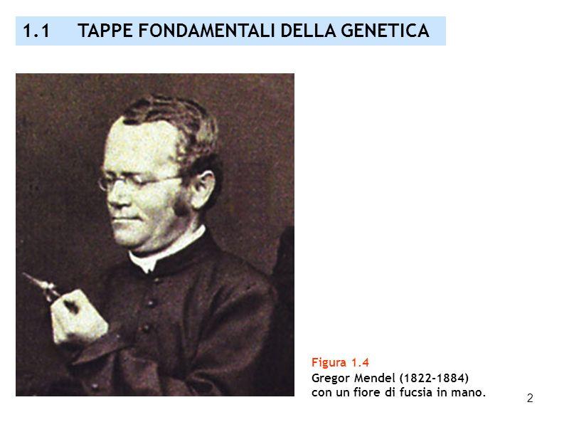 2 Figura 1.4 Gregor Mendel (1822-1884) con un fiore di fucsia in mano. 1.1 TAPPE FONDAMENTALI DELLA GENETICA