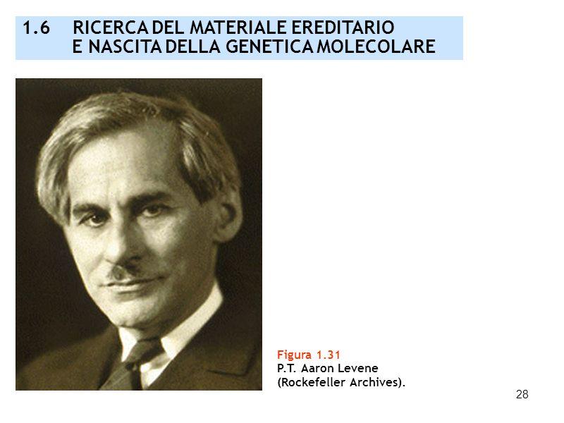 28 Figura 1.31 P.T. Aaron Levene (Rockefeller Archives). 1.6 RICERCA DEL MATERIALE EREDITARIO E NASCITA DELLA GENETICA MOLECOLARE