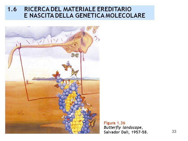 33 Figura 1.36 Butterfly landscape, Salvador Dalì, 1957-58. 1.6 RICERCA DEL MATERIALE EREDITARIO E NASCITA DELLA GENETICA MOLECOLARE