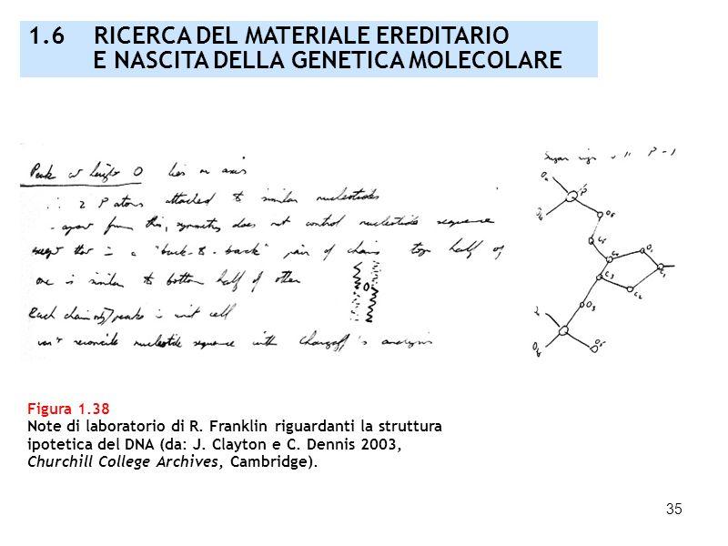 35 Figura 1.38 Note di laboratorio di R. Franklin riguardanti la struttura ipotetica del DNA (da: J. Clayton e C. Dennis 2003, Churchill College Archi