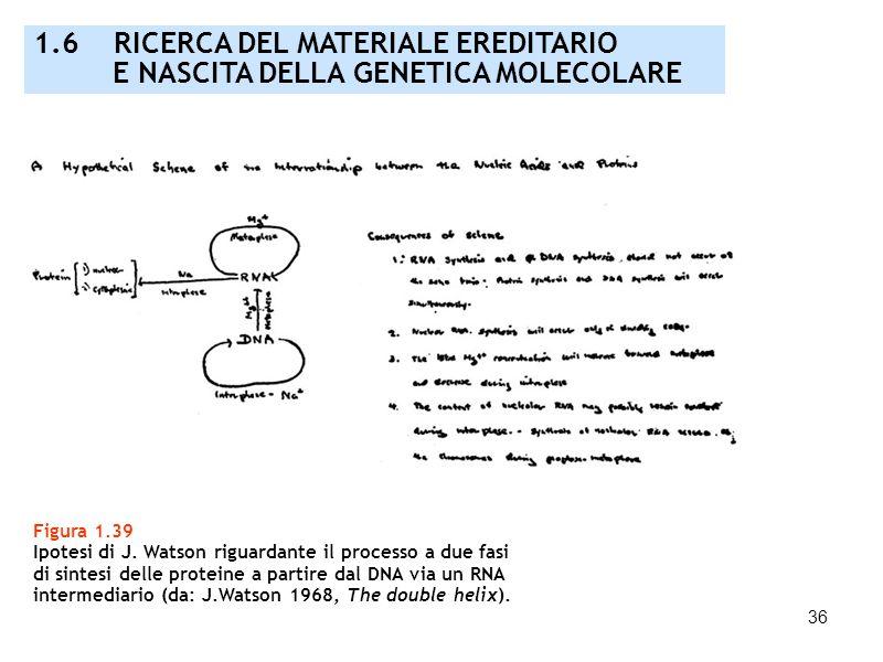 36 Figura 1.39 Ipotesi di J. Watson riguardante il processo a due fasi di sintesi delle proteine a partire dal DNA via un RNA intermediario (da: J.Wat