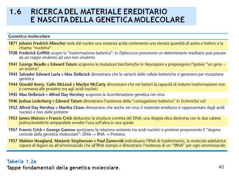 40 Tabella 1.2a Tappe fondamentali della genetica molecolare. 1.6 RICERCA DEL MATERIALE EREDITARIO E NASCITA DELLA GENETICA MOLECOLARE