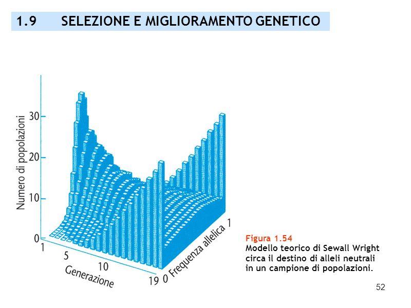 52 Figura 1.54 Modello teorico di Sewall Wright circa il destino di alleli neutrali in un campione di popolazioni. 1.9 SELEZIONE E MIGLIORAMENTO GENET