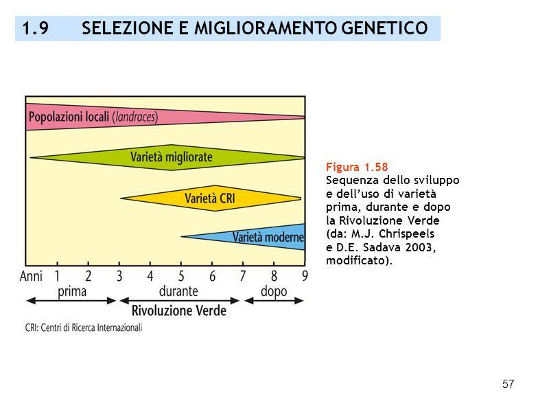 57 Figura 1.58 Sequenza dello sviluppo e delluso di varietà prima, durante e dopo la Rivoluzione Verde (da: M.J. Chrispeels e D.E. Sadava 2003, modifi