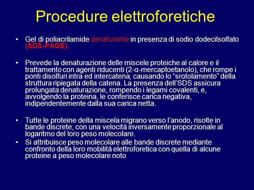 Gel di poliacrilamide denaturante in presenza di sodio dodecilsolfato (SDS-PAGE). Prevede la denaturazione delle miscele proteiche al calore e il trat