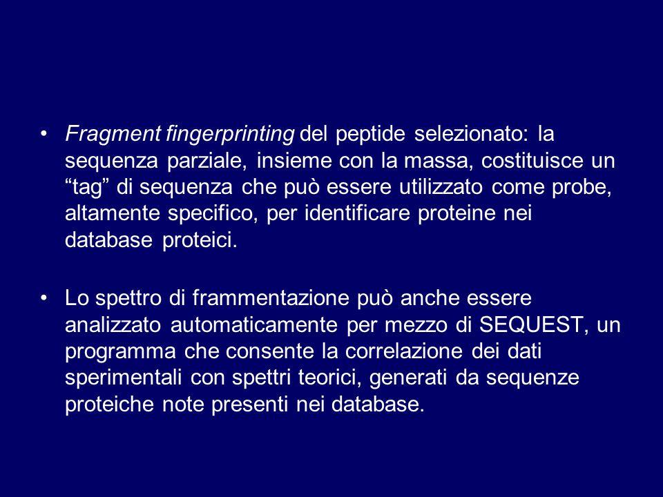 Fragment fingerprinting del peptide selezionato: la sequenza parziale, insieme con la massa, costituisce un tag di sequenza che può essere utilizzato
