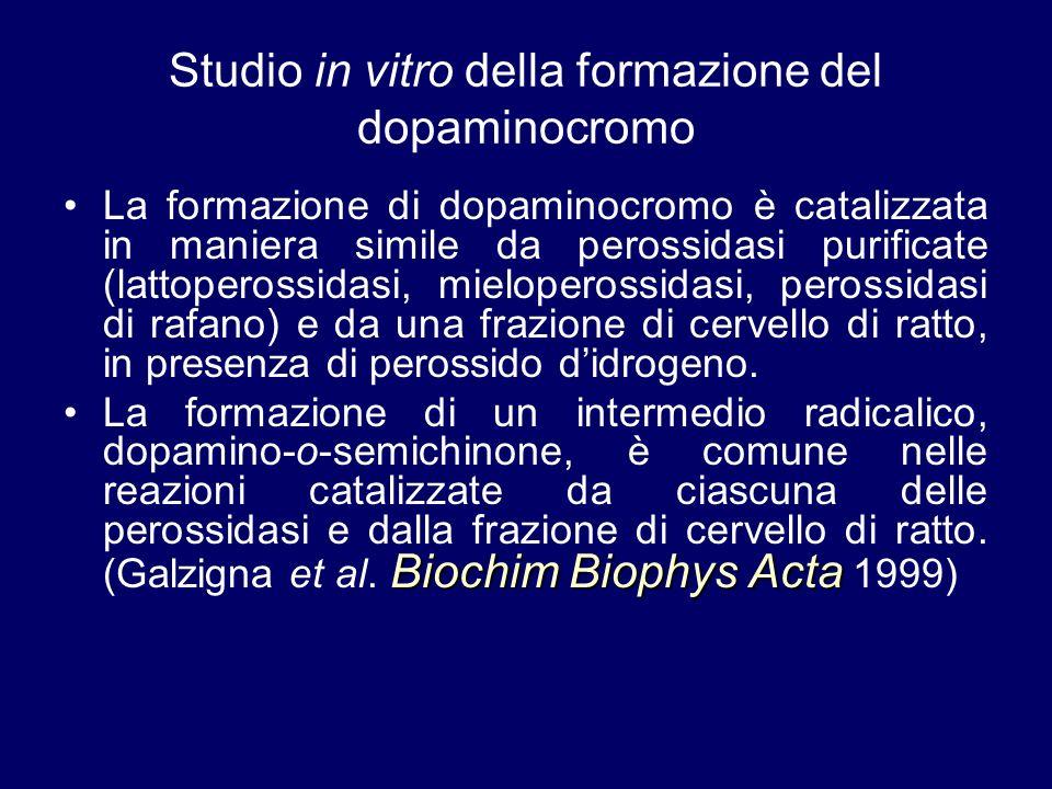 Studio in vitro della formazione del dopaminocromo La formazione di dopaminocromo è catalizzata in maniera simile da perossidasi purificate (lattopero