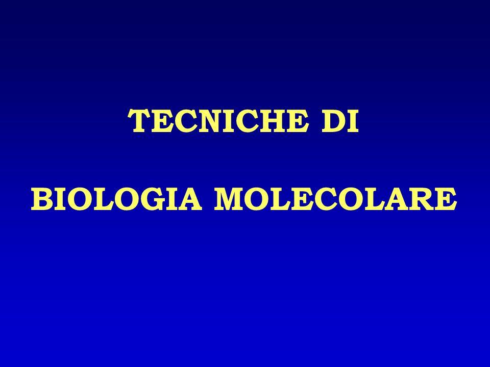 TECNICHE DI BIOLOGIA MOLECOLARE