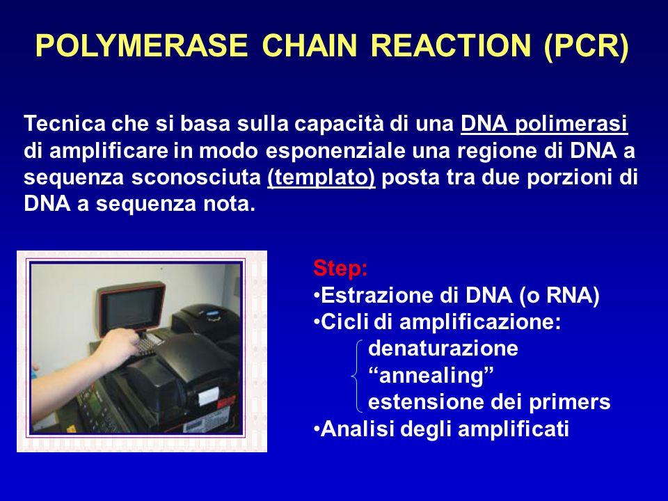 POLYMERASE CHAIN REACTION (PCR) Tecnica che si basa sulla capacità di una DNA polimerasi di amplificare in modo esponenziale una regione di DNA a sequ